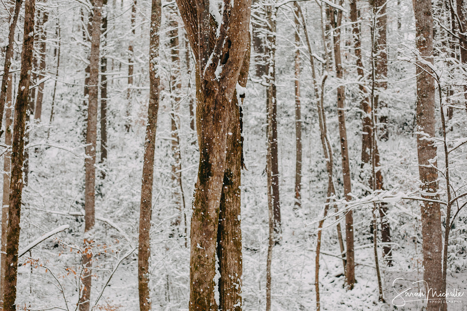 Wintery Trees in the Pisgah National Forest