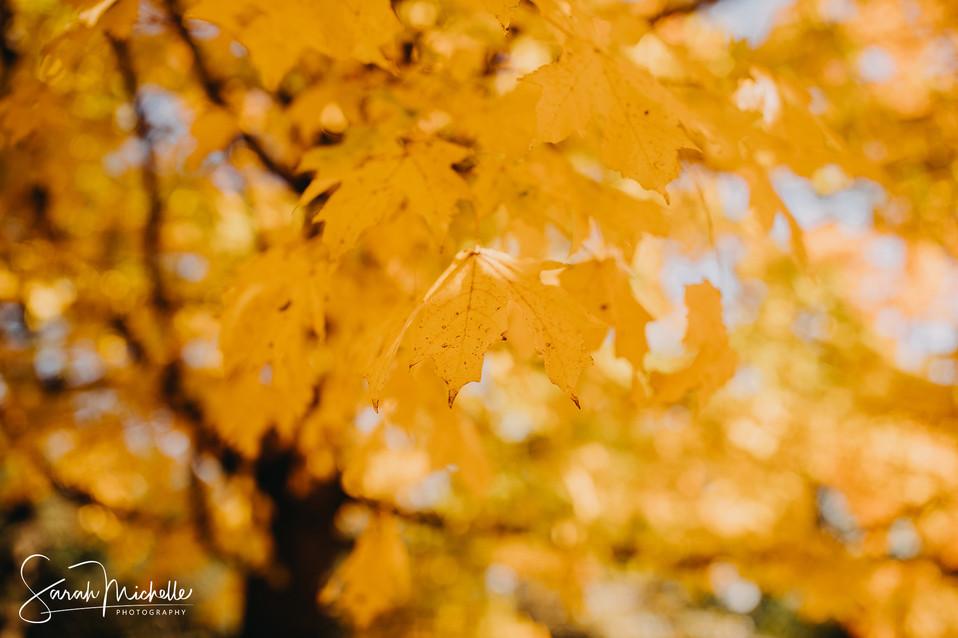 Pretty Autumn Yellow Leaf
