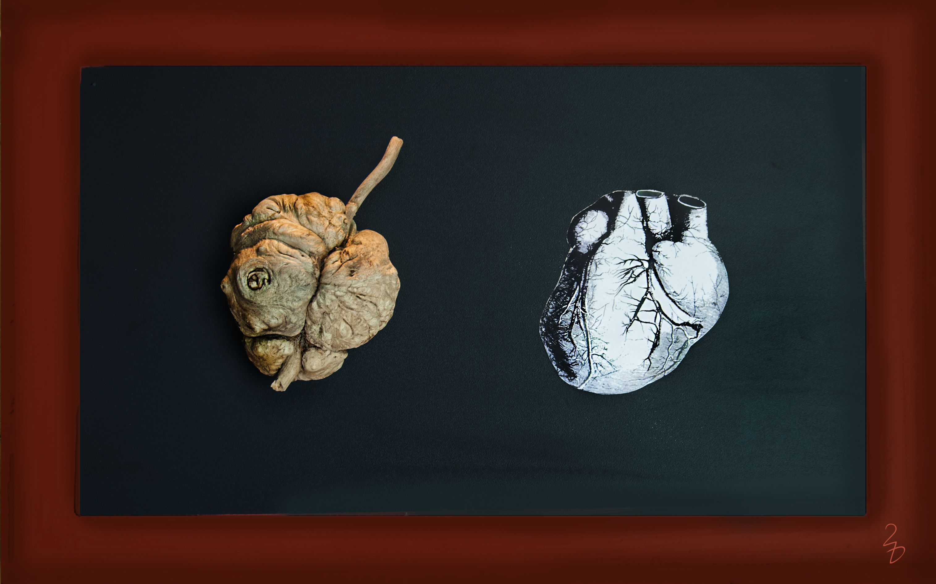 Herzwurzel