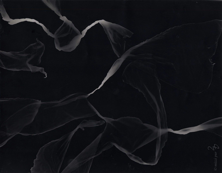 Quallenblumen