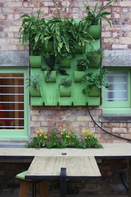Renee Davies plants