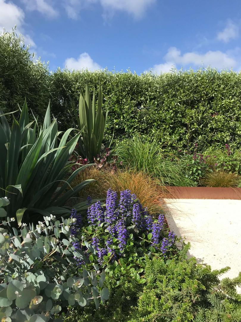 Louise Hanlon Garden Design.jpg
