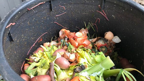 Composting - a more sustainable way of life