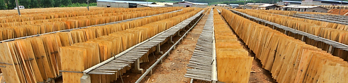 Wood Products, Forest Products, Market Intelligence, Market Reports, Veneer, Ply, China