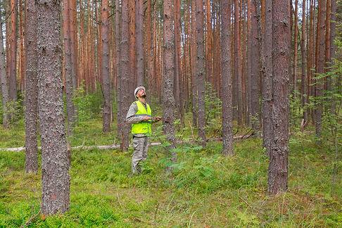 Forest Assessment, Estate Modelling, Operation Improvement, Tree Improvement, Pine Plantation, Silviculture