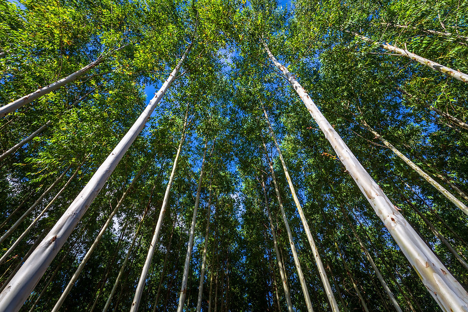 Forest Advisory, Forest Consultancy, Valuation, Plantation Management, Plantation Design