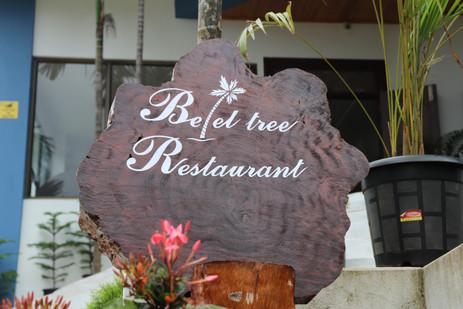 Betel Tree