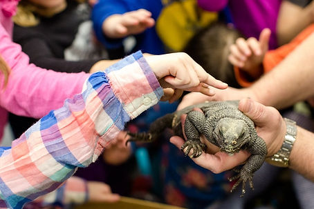 Seattle Reptile Guy Angel Island Chuckwalla