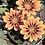 Thumbnail: Abbey Cascade