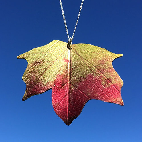 Ditton autumn Maple leaf