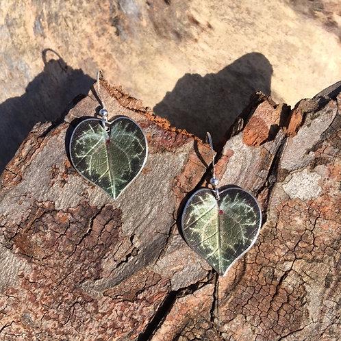 Cyclamen leaf earrings
