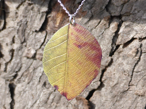 Autumn Beech leaf. Green and Gold