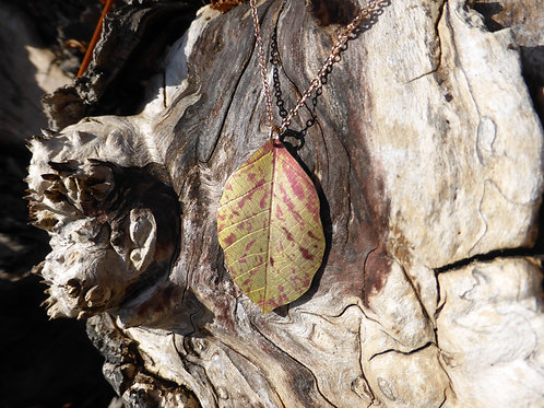 Autumn Beech leaf. Speckled