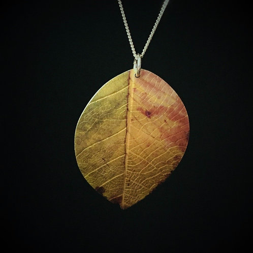 Beech leaf.