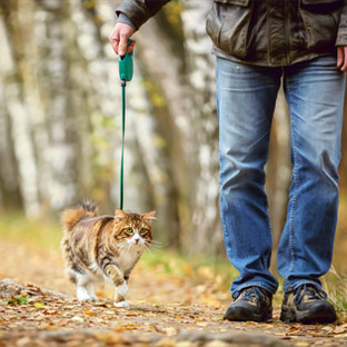 How To Harness and Leash Train Your Cat: Our Top 5 Tips