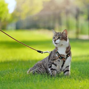 What Is a Catventurous Cat?