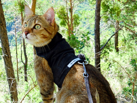 Choosing a Harness for Your Catventurer: Our Top 5 Tips