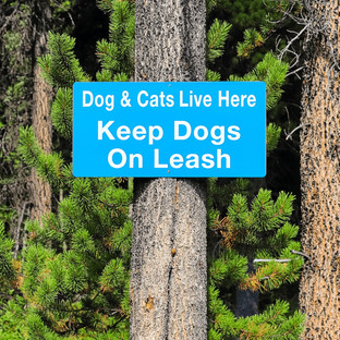 Strategies to Prevent and Manage Off-Leash Dog Attacks