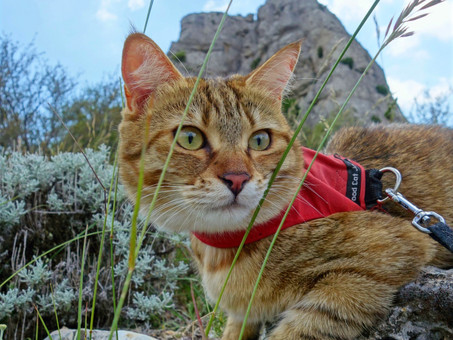 Safety First: Our Top 8 Catventurous Safety Tips