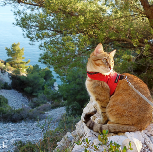 The Four Types of Cat Harnesses: Which One Is Right For Your Catventurer?