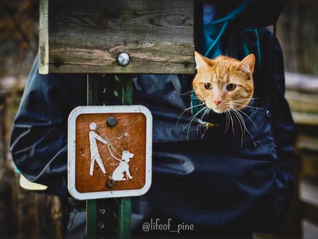 Raising Awareness, Support and Safety for Cats on Leash