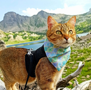Does Your Cat Have the 'Purrsonality' to Be a Catventurer?