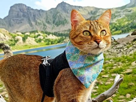 Understanding Your Catventurer's Personality