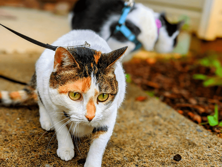 What's the Difference Between a Catventurous Cat and an Adventure Cat?