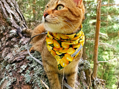 Our Golden Rules of Catventuring