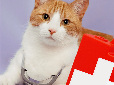 How to Create a Basic (and Beyond!) First Aid Kit For Your Catventurer