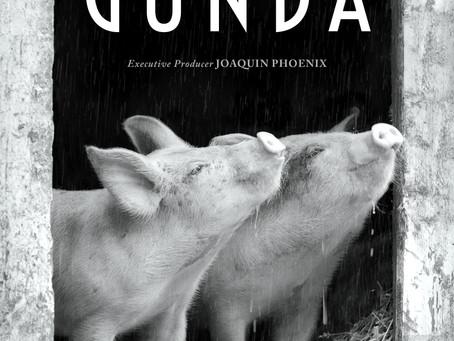 Gunda beleeft Nederlands première op 7 juni