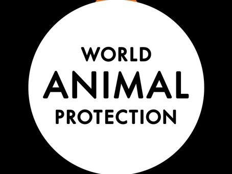 VACATURE - World Animal Protection zoekt medewerker relatiemanagement