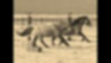 Carter Reservoir Wild Mustangs, mustangs, wild horses, Spanish horse
