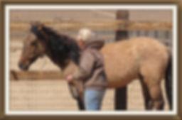 Carter wild horses, mustangs, dun factor characteristics