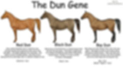 the dun gene, dun factor mustangs, dun factor characteristics