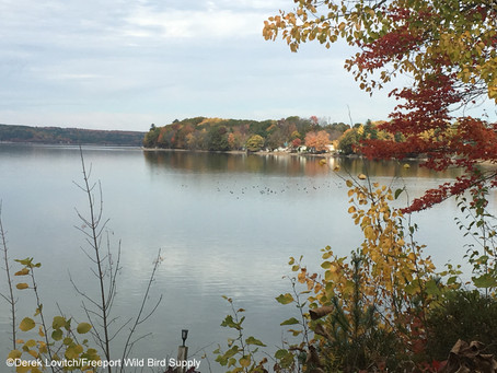"""Birds on Tap - Roadtrip! """"Fall Ducks and Draughts"""" Trip Report, 10/20/19."""