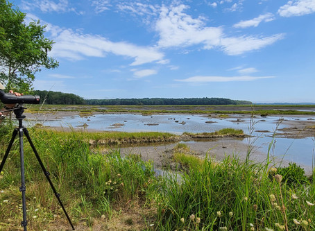 Birds on Tap - Roadtrip: Shorebirds and Steins! Trip Report, 8/23/2020.