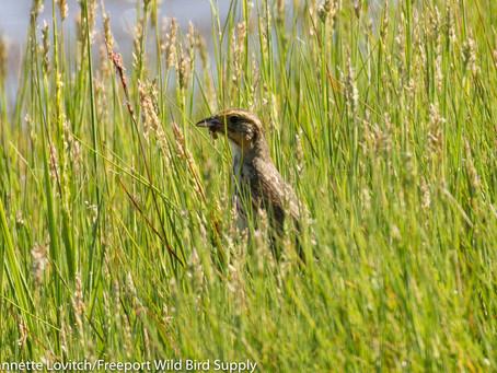 "Birds on Tap - Roadtrip: ""Shorebirds and Steins!"" Tour Report, 8/4/19"