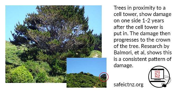 Facebook Trees show damage.jpg