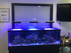 The Glorious Fish Tank