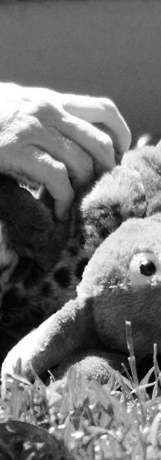 Baby Clouded Leopard.jpg