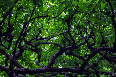 YuYuan Gardens 16