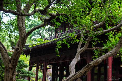 YuYuan Gardens 5