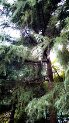 Fantasy canopy