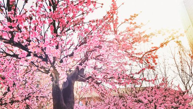 Artificial Cherry Blossoms