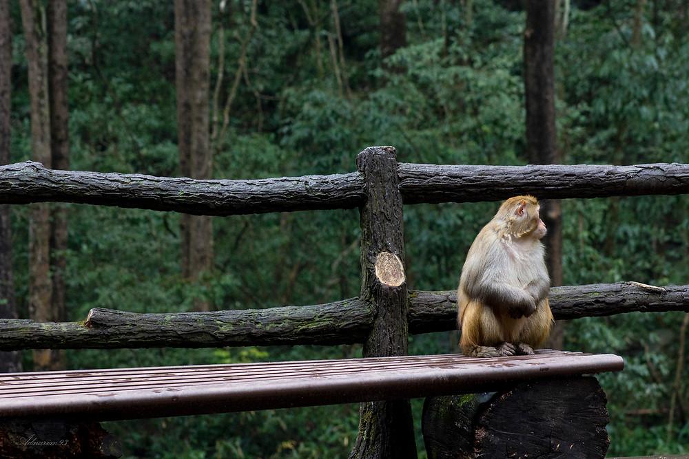 Native monkey