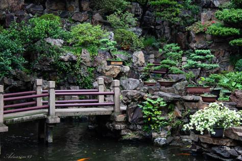 YuYuan Gardens 27