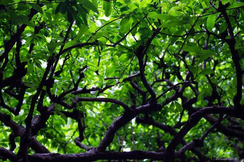 YuYuan Gardens 15