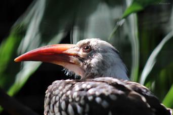 Regina Bird of Paradise
