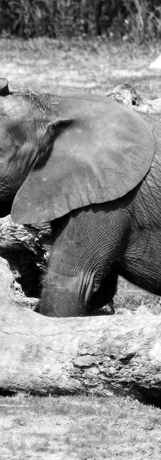 Baby Elephant 19.jpg
